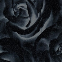 Роза черная, пленка ПВХ TM-437